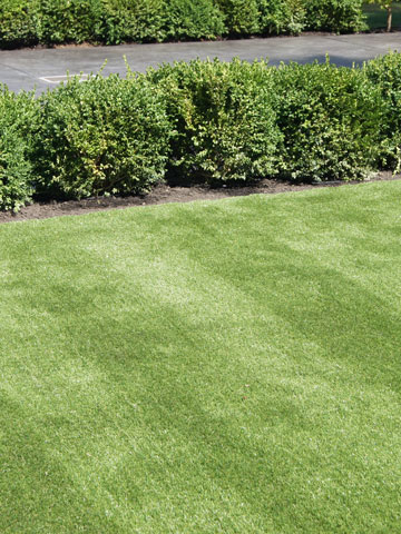 Artificial Grass in Landscaping Mission, Maple Ridge, Coquitlam, Abbotsford and Langley BC